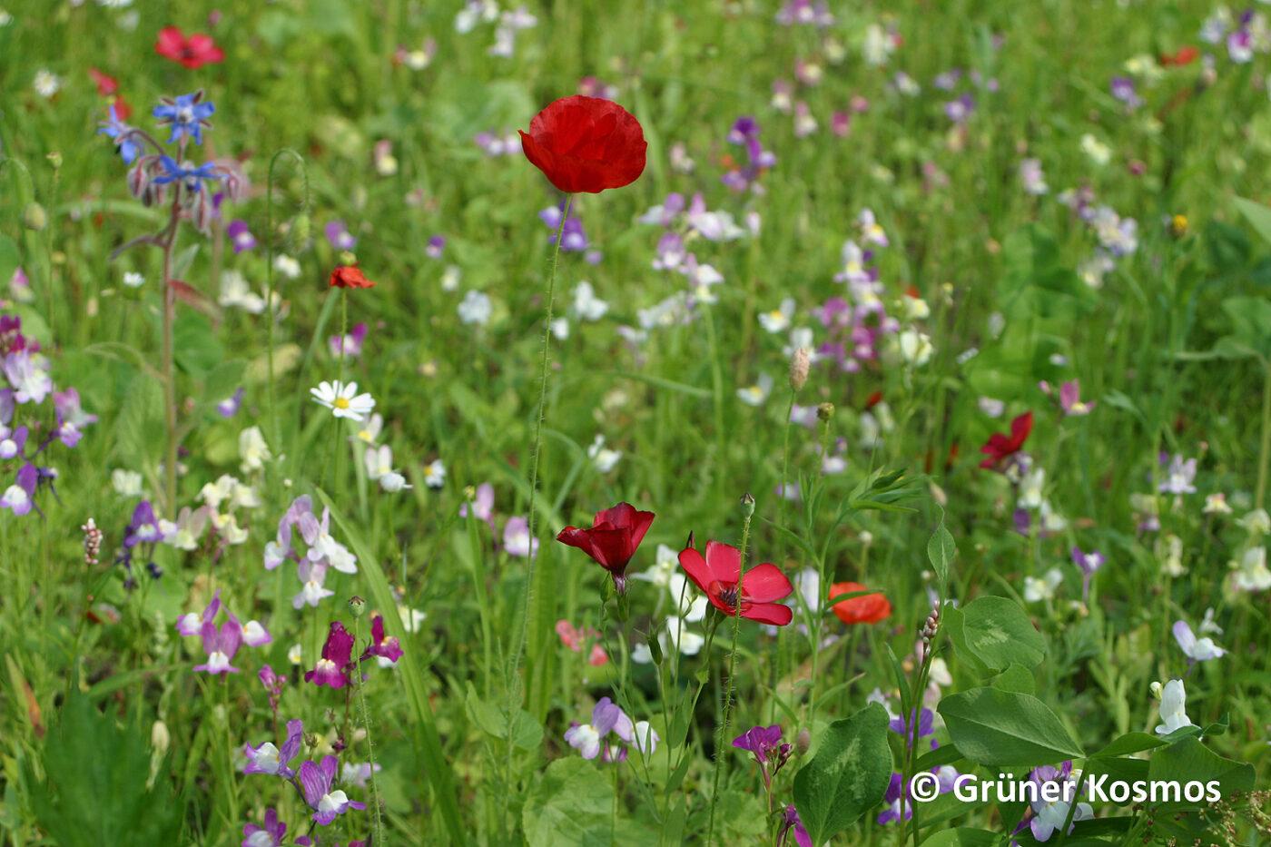 Für Wildblumen und gegen Glyphosat
