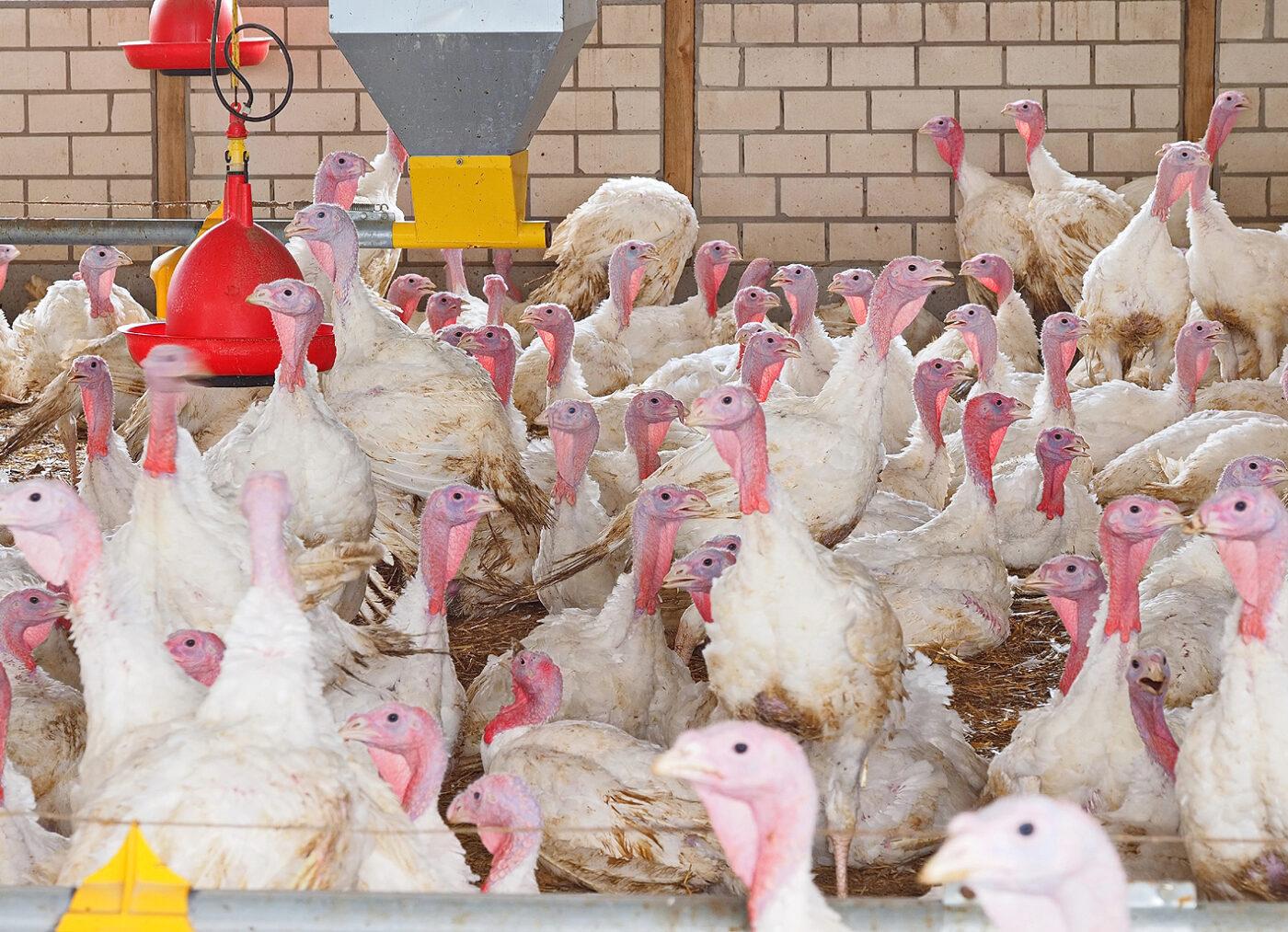 Grüne: Bewährtes Kontrollsystem für Antibiotikaeinsatz in der Tierhaltung nicht zerschlagen