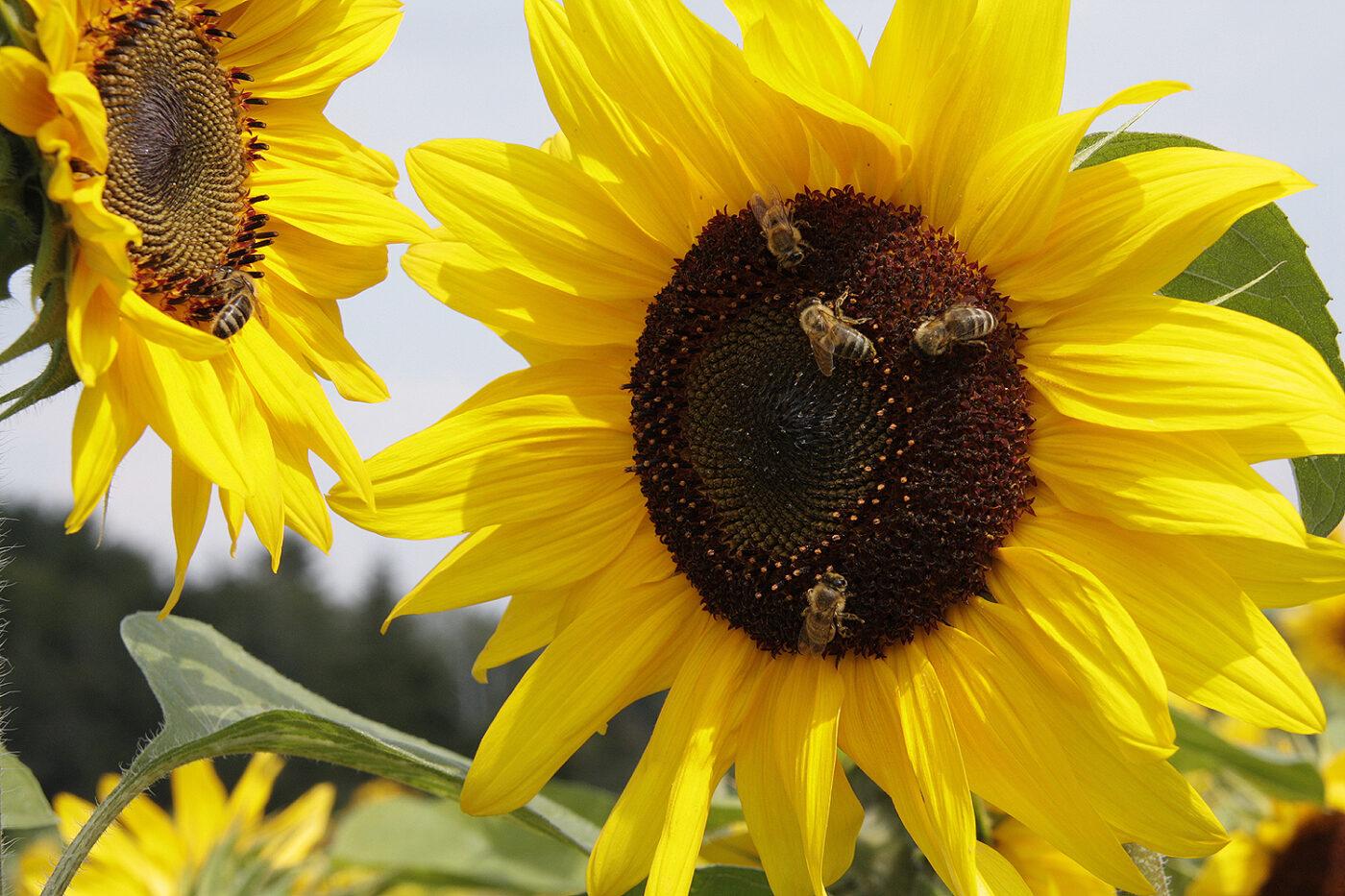 Lena Gumnior: Insektenschutzgesetz als Minimum unerlässlich